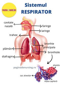 patol de boli de țesut conjunctiv)