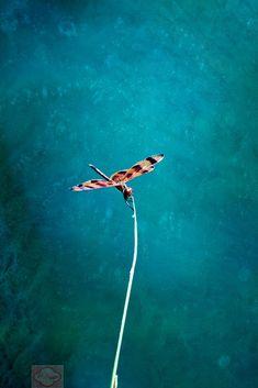 Dragonfly Water Minimalist  Fine Art Photograph Print by LKPhipps