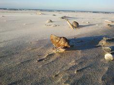 Strand Terschelling Oosterend