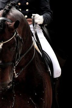 8/9/16 Via NBC Olympics  ·  Team USA's oldest competing Olympian, Phillip Dutton (@DuttonEventing), takes home bronze! 🐎 http://tw.nbcsports.com/eJ00