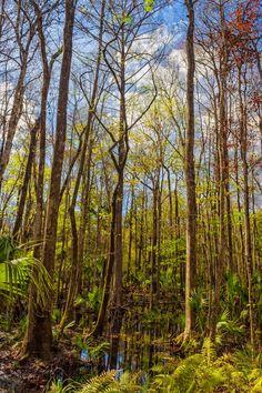 Swampland #2