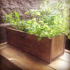 Boîte à fines herbes Plants, Plant, Planting, Planets