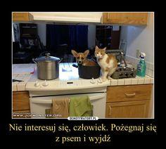 Funny Mems, Wtf Funny, Good Mood, Best Memes, I Laughed, Haha, Cute Animals, Jokes, Humor