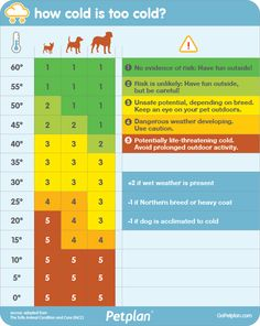 How cold is too cold outside for your dog? Use this chart to find out! #winter #weather #dogs