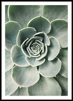 Cactus Flower is a wonderful botanical poster with the close-up of a large . - Cactus Flower is a wonderful botanical poster with the close-up of a green cactus. Poster Mural, Window Poster, Poster Prints, Poster Frames, Cactus Vert, Cactus Plants, Tropical Plants, Succulent Plants, Beach Portraits