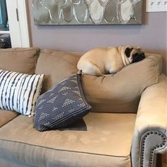 Since I arrived, the shape of this couch just hasn't been the same #pug