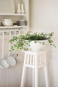 This plant is nice. Cabelo de noiva ou palnta arame...É uma trepadeira