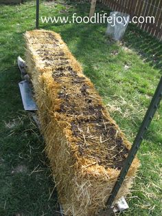 Straw Bale Garden Lessons - The Grow Network Hay Bale Gardening, Strawbale Gardening, Gardening Tips, Container Gardening Vegetables, Vegetable Garden, Compost, Little Green House, Short Plants, Straw Bales