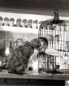 Il Gatto su RoseRosse&PepeNero