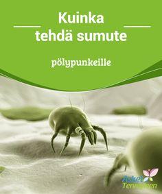 Kuinka tehdä sumute pölypunkeill  Pölyallergian aiheuttavat pienen pienet pölypunkkeina tunnetut eliöt,jotka aiheuttavat erilaisia inhottavia oireita.  #Mielenkiintoistatietoa