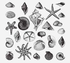 SEASHELLS FREE VINTAGE VECTOR PRINTABLE   http://www.freevintagevectors.com/2015/08/seashells-2.html