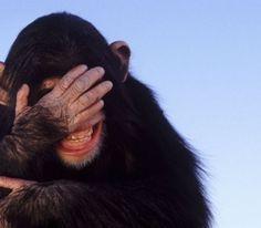 """Résultat de recherche d'images pour """"animal laughing"""""""