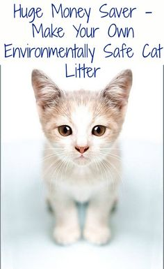 Cat Care Indoors Huge Money Saver - Make Your Own Environmentally Safe Cat Litter – DIY Cat Litter Brands, Cat Dog, Pug Dogs, All About Cats, Diy Stuffed Animals, T Rex, Crazy Cats, Pet Care, Cats And Kittens