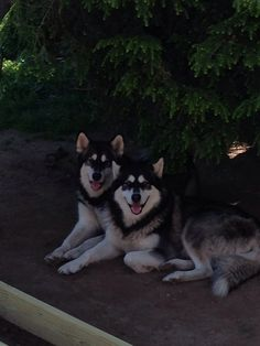 Mya & Oliver