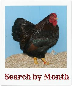 Welcome to the ever-expanding, most comprehensive listing of poultry show dates online!