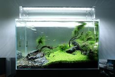 My favorite from Green Aqua Showroom by viktorlantos, via Flickr