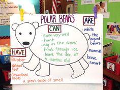 The Creative Colorful Classroom: Informational Writing chart about Polar Bears Bears Preschool, Preschool Activities, Winter Activities, Preschool Winter, Artic Animals, Penguins And Polar Bears, Informational Writing, Nonfiction, Kindergarten Science