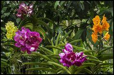 Walk through Singapore Botanic Gardens-27= | Walk through Si… | Flickr - Photo Sharing!