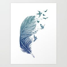 feathers, birds, swallows, nature...