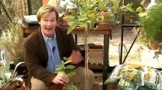 Allen gives us some tips on pruning a meyer lemon tree and how to protect it from pests.