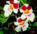 Não é por acaso que você é uma apaixonada por determinados tipos de flores. Saiba que apreciar muito Rosas, não gostar de Dálias, ou manter um fascínio por Orquídeas tem um significado muito especial.    Leia mais acessando o link:  http://www.mulherportuguesa.com/casa-a-jardim/jardim-e-plantas/792-as-energias-que-as-flores-libertam