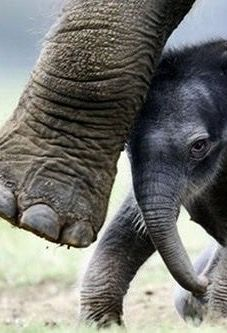 New born Elephant