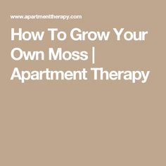 How To Grow Your Own Moss | Apartment Therapy