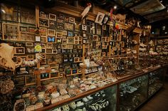 Museum or not? Wide Angle Wunderkammer. With the cashier's permission, I took this picture today in the SoHo Evolution store. It is a veritable Wunderkammer, filled to the ceiling with animal sculls, taxidermy, gemstones, and other exotic curiosities.