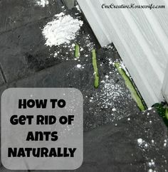 One Creative Housewife: How to Get Rid of Ants Naturally(Corn Starch & cucumber peels) Get Rid Of Ants, Tips & Tricks, Diy Cleaning Products, Cleaning Tips, Green Cleaning, Peeling, Pest Control, Bug Control, How To Get Rid