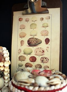 Itsy Bits and Pieces: A Naturalist Cabinet...