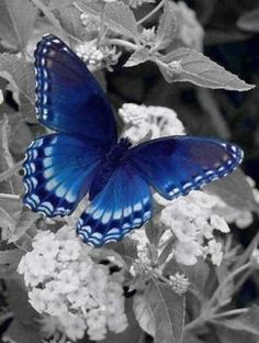 Blue butterfly ? ?? by VoyageVisuelle