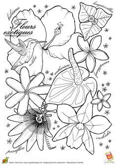 Coloriage Les Belles Fleurs Exotiques - Hugolescargot.com