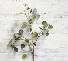 Shop faux silver dollar eucalyptus branch from Pottery Barn. Our furniture, home decor and accessories collections feature faux silver dollar eucalyptus branch in quality materials and classic styles. Faux Flowers, Silk Flowers, Pottery Barn, Small Urns, Cloud Craft, Eucalyptus Branches, Recycled Glass Bottles, Wine Bottles, Faux Plants