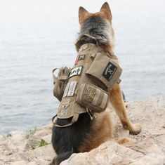 Military Tactical Dog Molle Vest Army Dog Clothes Hunting Police Harness Training Dog Vest with Detachable Pouches Tactical Dog Gear, Tactical Dog Harness, Service Dog Patches, Service Dogs, Best Hiking Gear, Army Dogs, Dog Training Techniques, Training Tips, Survival