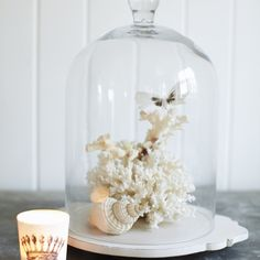 Coral & shell displays under glass domes, candles surrounding displays could be own products?