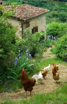 Country Farm, Country Life, Country Living, Farm Animals, Animals And Pets, Beautiful Birds, Beautiful Places, Chickens And Roosters, Country Scenes