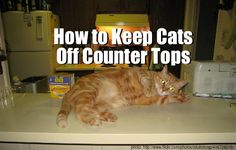 Q&A: How To Keep Cats Off Counter Tops