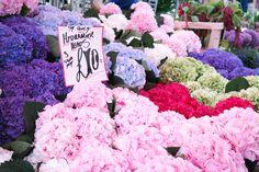Columbia Road Flower Market, Flowers, Plants, Flora, Plant, Royal Icing Flowers, Flower, Florals, Bloemen