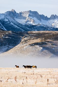 Wild and free horses in the mountains