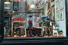 Bull Terrier in shop