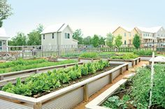 The Community Garden at Carlton Landing is a perfect learning spot for kids