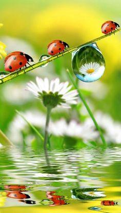 - Marienkäfer - Welcome Haar Design Beautiful Creatures, Animals Beautiful, Cute Animals, Beautiful Bugs, Beautiful Flowers, Photo Coccinelle, Cute Pictures, Beautiful Pictures, Nature Wallpaper