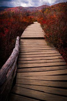 #Asheville, #NorthCarolina fall autumn foliage on the Blue Ridge Parkway