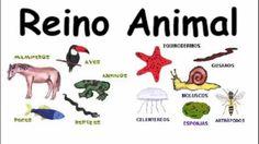 Los gusanos:  Tienen un cuerpo blando y alargado y crecen de patas. Hay varios tipos diferentes de gusanos  Los moluscos: Su cuerpo es blando y a menudo ésta protegido por una concha  Los equinodermos: Tienen un esqueletos interno hecho de placas . Y  algunos púas   Los artrópodos: Tienen esqueleto externo y patas articuladas. Incluye el grupo de los insectos.