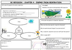 Amazing set of biology revision mats that learners can work at independently!