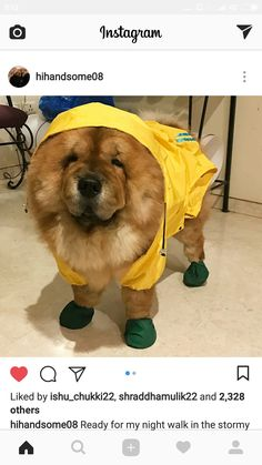 Dur to rain in Mumbai handsome is ready with his raincoat ❤️ @HandsomeMalik