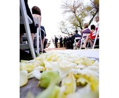 Kimberly Jarman Photography. Yellow rose petals. Eco-friendly rose petals available at www.flyboynaturals.com over 100 colors to choose from!