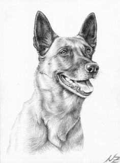 Malinois Hunde Zeichnung