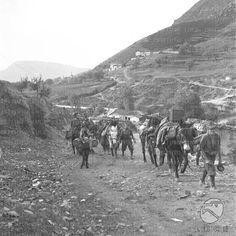 Reparto Guerra Albania - Truppe italiane e albanesi in movimento - Soldati, cavalli e muli si fermano lungo un fiume