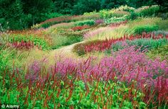 New Perennials: Oudolf's Millennium Garden at Fakenham, Norfolk, shows how beautiful the combination of grasses and flowers can be